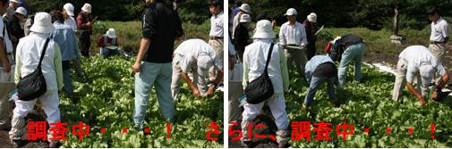 090924_虫害・病害を調査中
