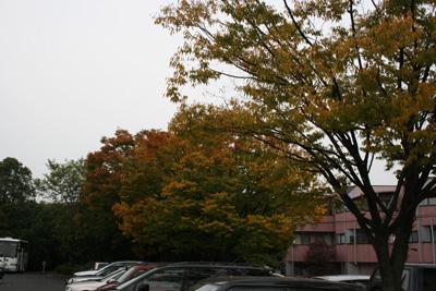 091024_駐車場の紅葉